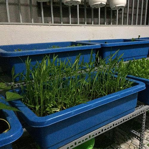 Khay trồng rau thông minh màu xanh biển