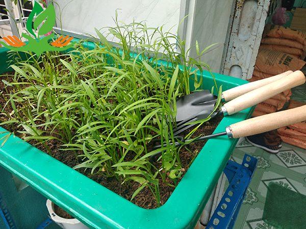 Bộ dụng cụ làm vườn 3 món