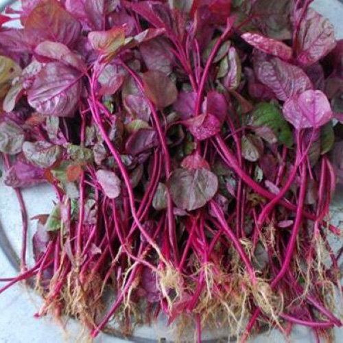 Hạt giống rau dền đỏ
