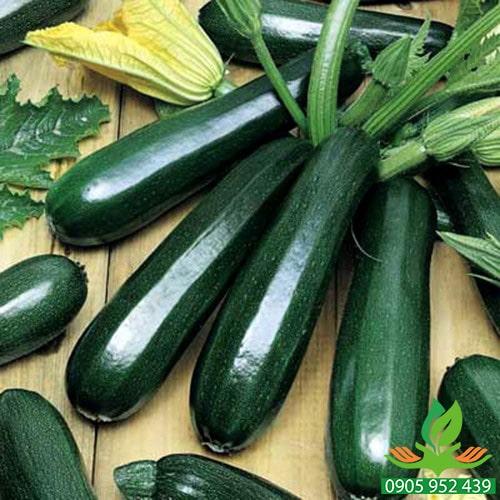 Hạt giống bí ngòi trái xanh