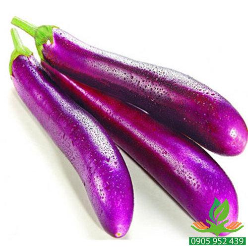 Hạt giống cà tím dài