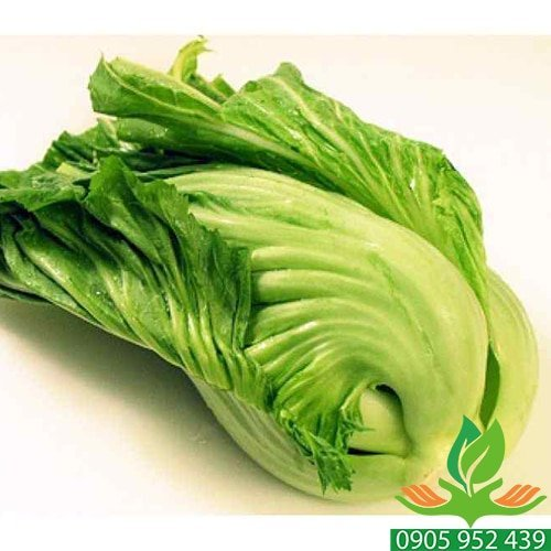 Hạt giống cải bẹ dưa