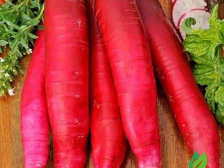 Hạt giống củ cải đỏ dài