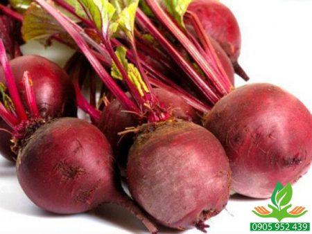 Hạt giống củ dền Crimson