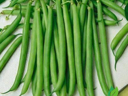 Hạt giống đậu cove dây leo hạt trắng