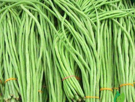 Hạt giống đậu đũa hạt đen