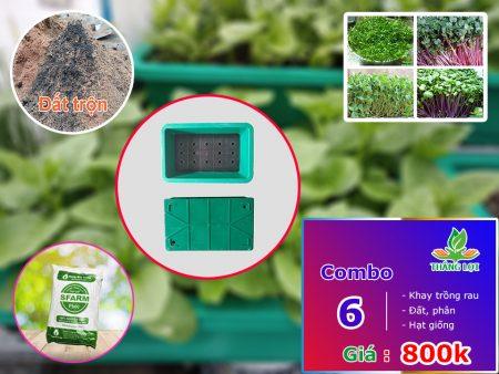 Combo 6 khay trồng rau gồm đất trộn, phân, hạt giống