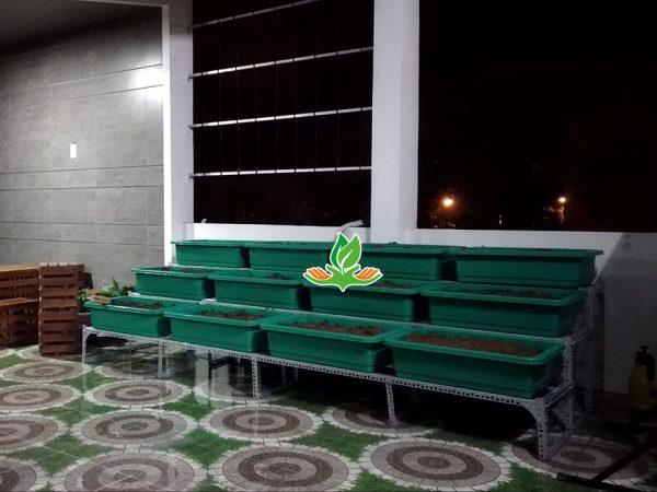 Bộ kệ trồng rau bậc thang 3 tầng 12 khay không giàn leo