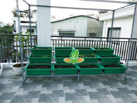 Bộ kệ trồng rau bậc thang 3 tầng 12 khay có giàn leo