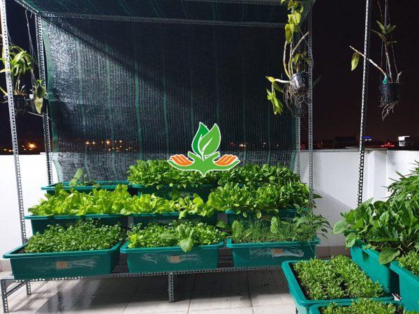 Bộ kệ trồng rau bậc thang 3 tầng 9 khay có giàn leo
