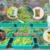 Trọn gói thi công kệ trồng rau bậc thang 3 tầng 9 khay không có giàn leo