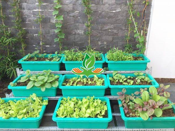 Kệ trồng rau bậc thang 3 tầng 9 khay không có giàn leo